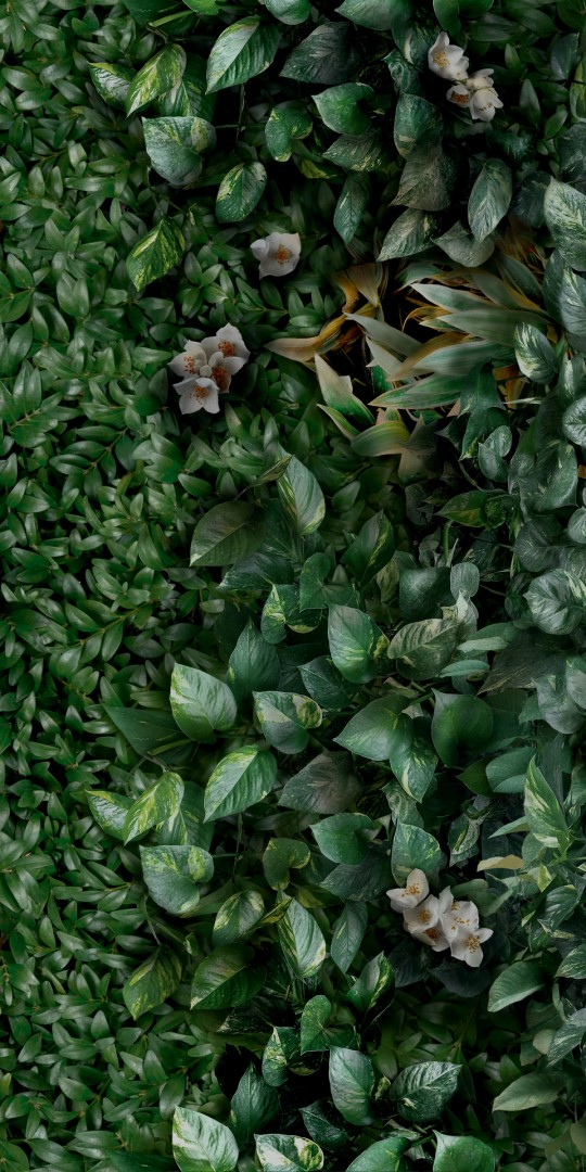 Obklad Greenwall A 50x100 cm, mat